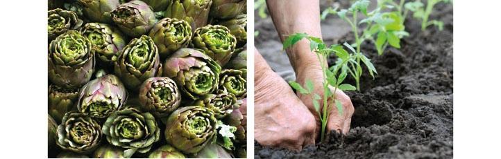 Produits biologiques et artichauts témoignants de notre engagement pour notre planète