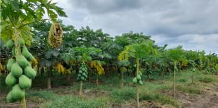 local farmers Angola