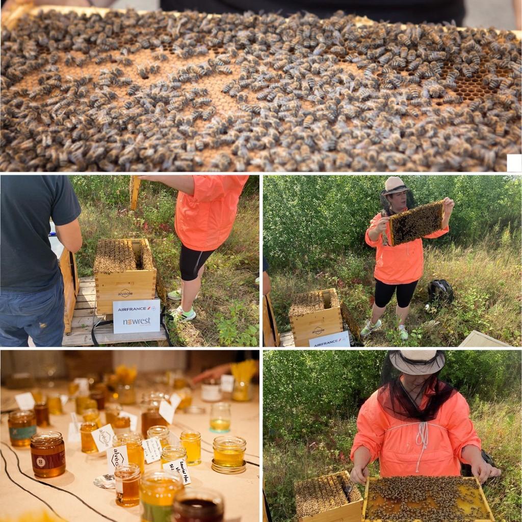sustainable beekeeping Montreal